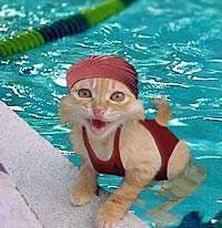 Kitty Swim class